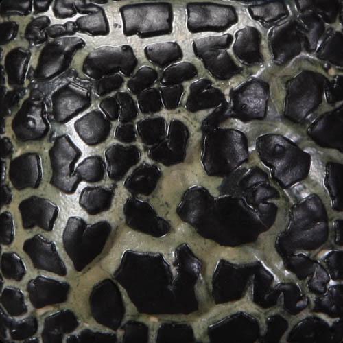SW404 Black Mudcrack
